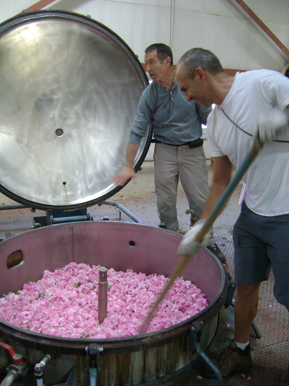 rose, rose extraction, perfume, how to make perfume, fragrance, Grasse, Chanel No. 5, Chanel perfume