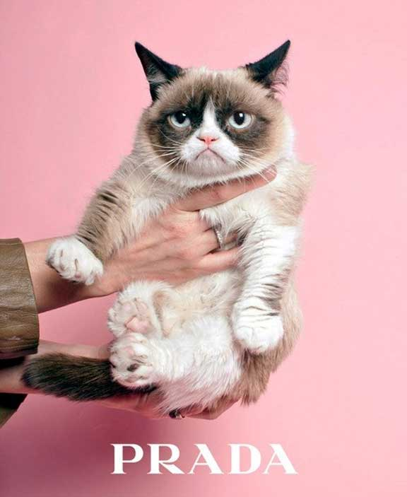 grumpy cat, prada, fashion advertising, spoof