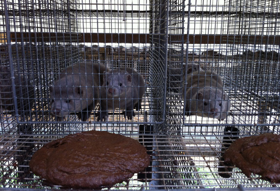 fur, mink farm, kopenhagen fur, pro fur, fur farming, fur is green