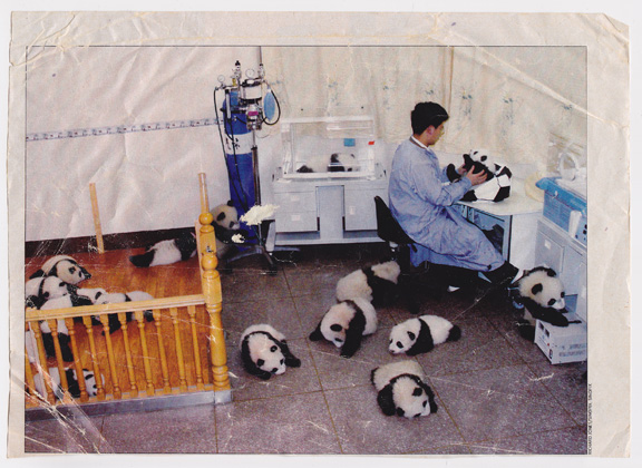 baby pandas, pretty pictures, personal photos